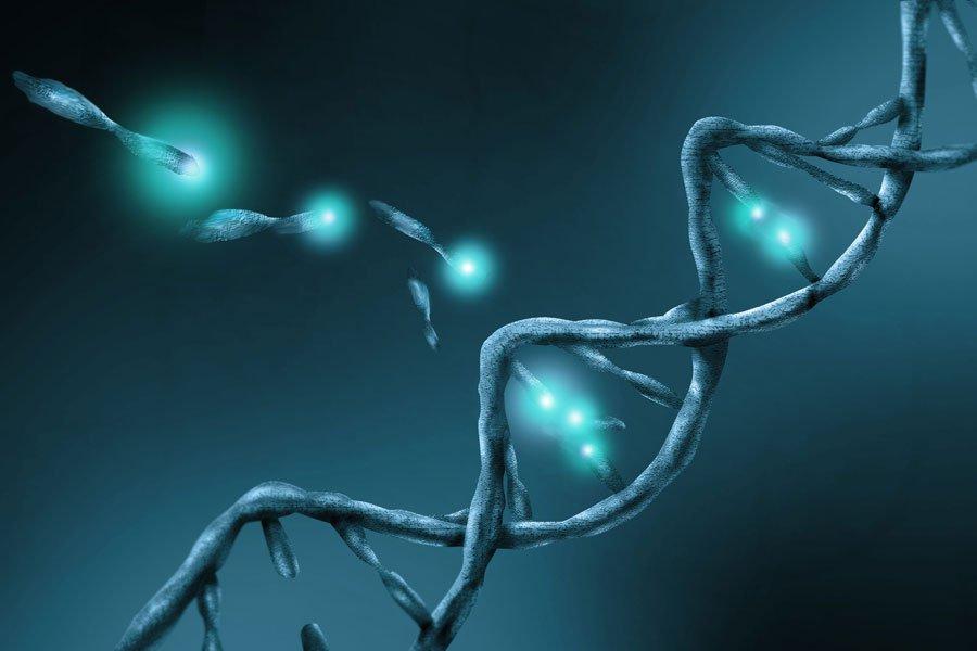 Разрушаются ДНК клеток