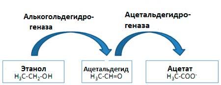 схема реакции детоксикации спирта в организме