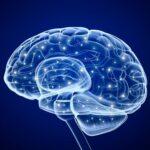 Миф второй: алкоголь убивает мозг
